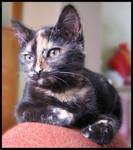 jméno kočky: Babu  jméno majitele: ID MORGANA přezdívka: Babetka, Babulenka, Bubu rok narození: 2004 trvalé bydliště: Praha další fotky: klik