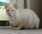 jméno kočky: Killian Ignac Dee  jméno majitele: ID TERRYNKA přezdívka: Nac, Culik rok narození: ? trvalé bydliště: Praha další fotky: klik
