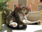 jméno kočky: Číča  jméno majitele: ID APRILMOUSE přezdívka: ? rok narození: 1998 trvalé bydliště: Jaroměř další fotky: ?