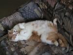 jméno kočky: Ben Happycat  jméno majitele: ID MILUNI přezdívka: Pelichárna rok narození: 1991 trvalé bydliště: Praha další fotky: ?