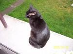 jméno kočky: Black  jméno majitele: ID JOGINKA přezdívka: ? rok narození: 1999 trvalé bydliště: Poděbrady další fotky: ?