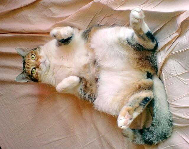 jméno kočky: Zuzanka  jméno majitele: ID CORIM přezdívka: Zuzi, Jatezabijutymrcho rok narození: ? trvalé bydliště: ?