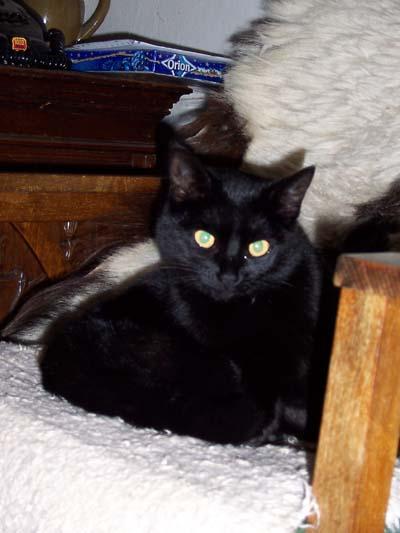 jméno kočky: Bublinka  jméno majitele: ID ELLIE přezdívka: Bubu, Něžňoučká kočička, Máša rok narození: 2004 trvalé bydliště: Libouchec další fotky:?