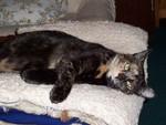jméno kočky: Johanka  jméno majitele: ID ELLIE přezdívka: Johoho, Bačkory, Mača, Máša rok narození: 2002 trvalé bydliště: Libouchec další fotky:?