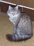 jméno kočky: Tánička  jméno majitele: ID ELLIE přezdívka: Vrtule, Tánice, Máša rok narození: 2004 trvalé bydliště: Libouchec další fotky:?