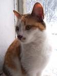 jméno kočky: Zuzanka  jméno majitele: ID ELLIE přezdívka: Zuzíček, Zuzu, Máša rok narození: 2002 trvalé bydliště: Libouchec další fotky:?