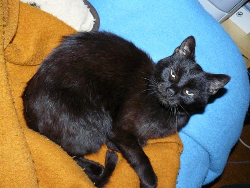 jméno kočky: Kesson  jméno majitele: ID HITOMI přezdívka: Kess, Kesson, Mrcha, Potvora, Micin, Velkovezir Kesson rok narození: 1997 trvalé bydliště: Svoboda nad Úpou