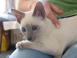 jméno kočky: Aristid  jméno majitele: ID KALLA přezdívka: Arísek, ufounek rok narození: 2006 trvalé bydliště: Praha