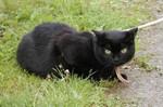 jméno kočky: Mura  jméno majitele: ID CATSIAM přezdívka: Márinka rok narození: 1994 trvalé bydliště: Velké Přílepy další fotky: klik