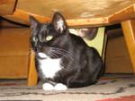 jméno kočky: Matylda  jméno majitele: ID MORGANA přezdívka: ? rok narození: ? trvalé bydliště: Praha  další fotky: klik