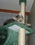 jméno kočky: Morrongo  jméno majitele: ID NAVON_DU_SANDAU přezdívka: ? rok narození: 2004 trvalé bydliště: Praha další fotky: ?