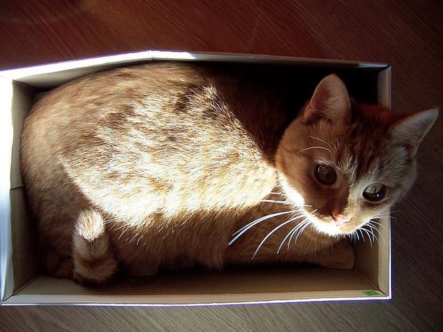 jméno kočky: Mačkálek  jméno majitele: ID NADYA přezdívka: Maky, Kotě, Makýsek rok narození: 2007 trvalé bydliště: Praha