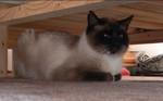 jméno kočky: Noris  jméno majitele: ID MARKYTKAK přezdívka: Norísek, pan Botička rok narození: 2004 trvalé bydliště: Praha