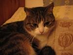 jméno kočky: Mia  jméno majitele: ID RUDIE přezdívka: Miunka rok narození: 2002 trvalé bydliště: ?