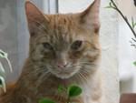 jméno kočky: Parcifal  jméno majitele: ID RUDIE přezdívka: Parsík, Parsíček rok narození: 2004 trvalé bydliště: ?
