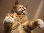 jméno kočky: Rýšánek  jméno majitele: ID DIDL přezdívka: Miluška rok narození: 1997 trvalé bydliště: Jablonec nad Nisou další fotky: klik