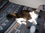 jméno kočky: Tumayku  jméno majitele: ID SAGEMA přezdívka: Voblud, Kožíšek rok narození: 1999 trvalé bydliště: Praha