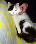 jméno kočky: Šántí  jméno majitele: ID CAKATAM přezdívka: Berka, Šánťule rok narození: 2005 trvalé bydliště: Praha