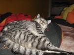jméno kočky: Káťa  jméno majitele: ID SHAMPOO přezdívka: tygr malajský,hlodavec rok narození: 2005 trvalé bydliště: Praha