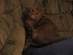jméno kočky: Sherry  jméno majitele: ID EHLISEK přezdívka: Puc, Mazel, Šeba rok narození: 4.5.2002 trvalé bydliště: Praha