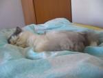 jméno kočky: William  jméno majitele: ID TALANKA přezdívka: Willi, Aleš, Trouba rok narození: 2005 trvalé bydliště: Hradec Králové