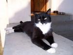 jméno kočky: Vanessa  jméno majitele: ID JOGINKA přezdívka: ? rok narození: 2003 trvalé bydliště: Poděbrady další fotky: ?